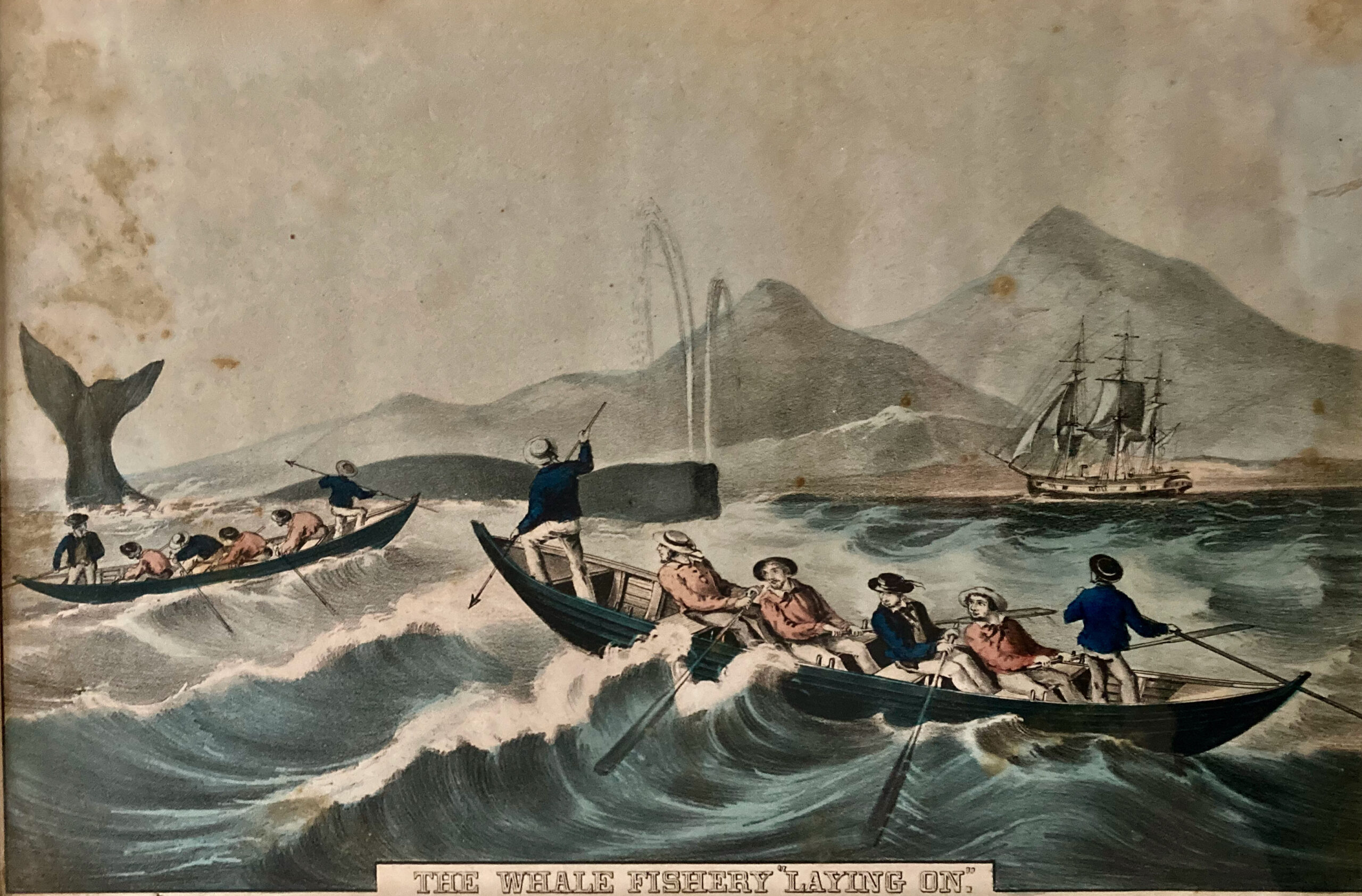 Boat Tour: Blowholes, Blubber, & Breaches. Whaling Tales on the Thames.